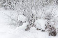 Wit Winters Sprookjesland Stock Foto's