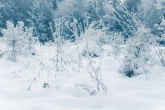 Wit Winters Sprookjesland Royalty-vrije Stock Foto