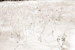 Wit Winters Sprookjesland Royalty-vrije Stock Afbeeldingen