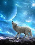 Wit Wolf Howling Moon, Manen Stock Afbeelding