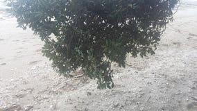 Wit zand stock foto
