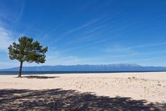 Wit zandig lakeshorelandschap met eenzame groene pijnboom royalty-vrije stock afbeelding