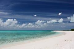 Wit zandstrand op Cook Islet stock fotografie