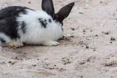 Wit Zwart konijn Stock Fotografie