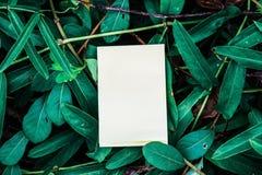 Witboek met groen blad voor nota Stock Fotografie