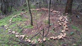Witch& x27; круг гриба s Стоковая Фотография RF