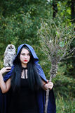 Witch with a bird Stock Images