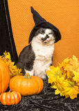 Witch Cat Stock Images