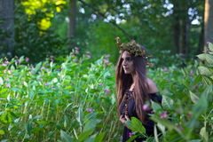Witch in dark forest Stock Image