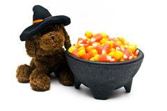 Witch Dog and Candy. Toy dog in a witch's hat beside a cauldron bowl of candy corn Stock Image