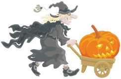 Witch with a Halloween pumpkin. A sorceress carrying on her barrow a big pumpkin with a carved scary smile Royalty Free Stock Photo