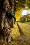 Witch hat and broom in autumn. Halloween witch hat and broom against a tree stock photography