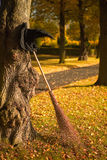 Witch hat and broom in the fall. Halloween witch hat and broom against a tree royalty free stock photos