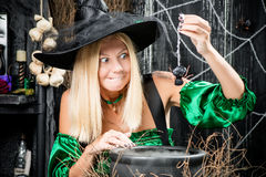 The witch in a hat holds a spider over a pot Royalty Free Stock Photos