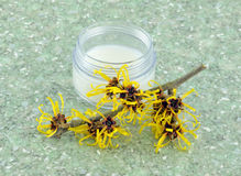 Witch Hazel  Cream Stock Photos