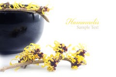 Witch hazel  and cream pot isolated on white background Stock Photos