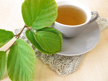 Witch hazel tea Stock Image
