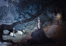 Witch on the lake feeds the swans. royalty free stock images