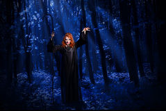 Witch in the moonlight forest Royalty Free Stock Images