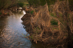 Witch river. River bank, overgrown with bushes unusual Stock Photography