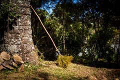 Witch`s Broom. In the forest stock photography