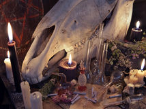 Witch table with black candle, horse skull, magic bottles and paper scrolls Royalty Free Stock Image
