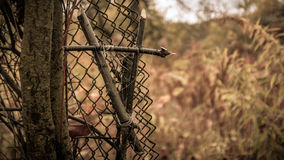Witch vampire hallowen. Tied branches symbol on the fence Stock Photography