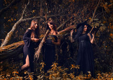 Witches in a dark forest stock image