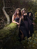 Witches in dark forest Royalty Free Stock Photography