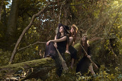 Witches in dark forest Stock Image