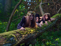 Witches in dark forest Royalty Free Stock Images