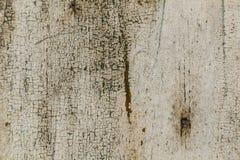 wite特写镜头细节崩裂了在生锈的金属墙壁上的油漆 免版税图库摄影