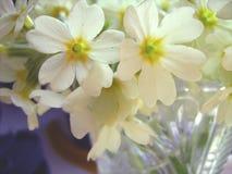 Wite blommor Arkivbilder