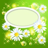 Wite frame with daisy and bubbles Stock Photography
