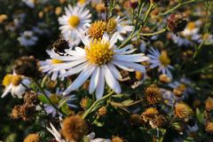 Wite krzaka żółty kwiat w ogrodowego whit tła chłodno kwiacie strzela out Fotografia Stock