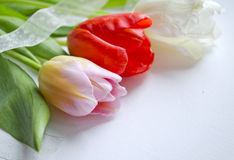 Świąteczny skład z pięknymi tulipanami Może używać dla wakacyjnych kart, zaproszeń, ulotek, plakatów lub inny, projekt Zdjęcie Royalty Free