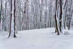 Witer山风景7 库存图片