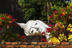 Withe buddha in flower Stock Photos