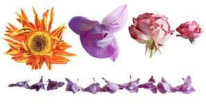 Wither-Blumen Lizenzfreie Stockfotografie