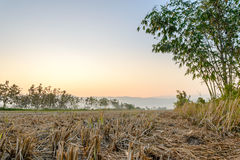 Wither dell'azienda agricola Fotografia Stock Libera da Diritti