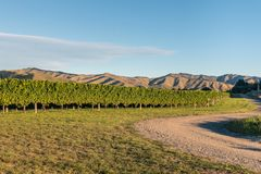 Wither Hills vineyards in Marlborough region, New Zealand royalty free stock image