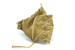 Wither leaf Royalty Free Stock Photos