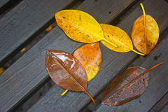 The Wither Leaves Fallen. The Wither Leaves Fallen On Wet Wooden Background Stock Image