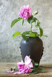 Wither rose in ceramic vase Royalty Free Stock Images