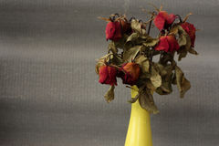 Wither rose, died rose Stock Photography