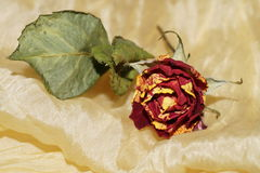 Wither roses on yellow silk Royalty Free Stock Photos