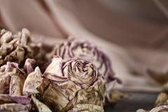 Withered завяло бутоны роз и лепестков Стоковые Фото