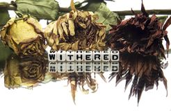 Withered. Text message with wilted flowers stock photo
