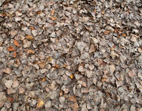 Withered autumn leaves Stock Image