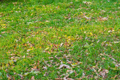 Withered autumn leaves and grass. Royalty Free Stock Photos